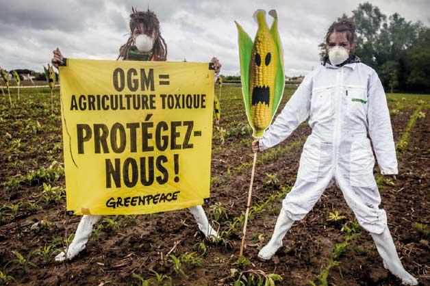 Pierre Baelen/Greenpeace / A Europa, la informació sobre cultius transgènics ha estat protagonitzada per campanyes de rebuig promogudes per organitzacions ecologistes.