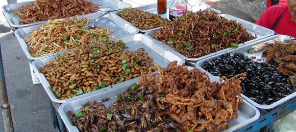 Insectes a granel en un mercat
