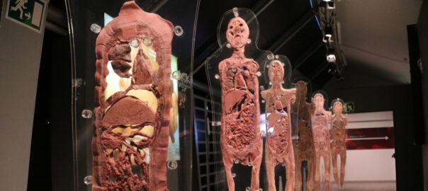 Human bodies'