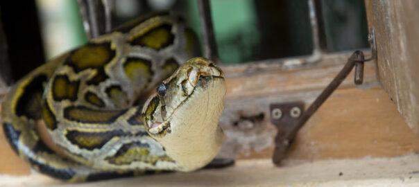 serp tailandia
