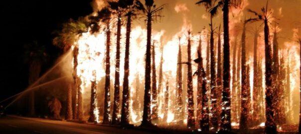 incendi elx