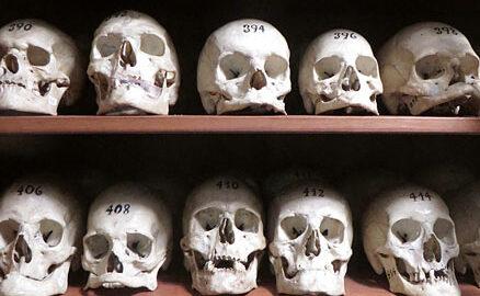 col·lecció ossos
