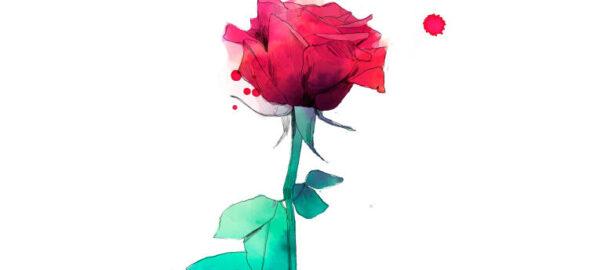 Rosa virtual Sant Jordi 2020