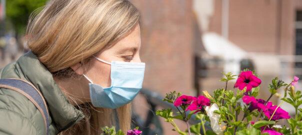 recuperar olfacte