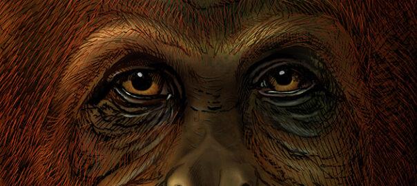 paleoproteòmica Gigantopithecus blacki