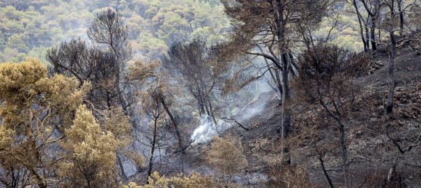 Pirineu Incendi Anoia