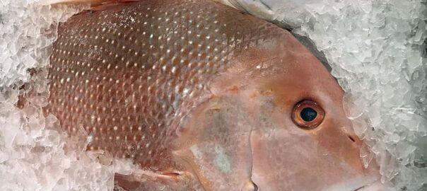 Peix blau omega-3