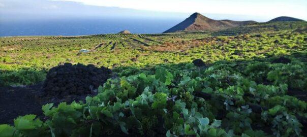 La Palma, vinyes del celler Matias i Torres-28073135