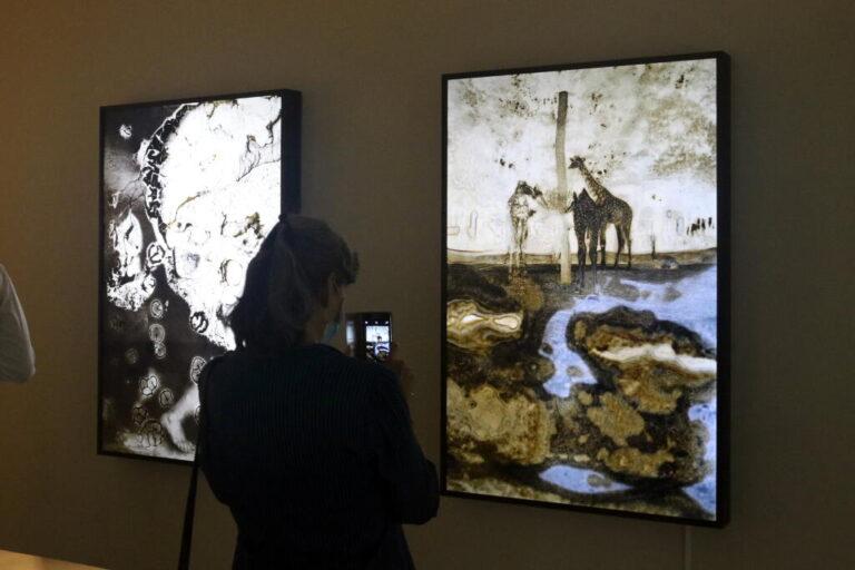 Imatge de l'exposició 'Monstres' de Joan Fontcuberta, a la Fundació Vila Casas